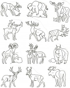 Antlers and Horns Block - ACAHB - Collection of 12