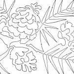 ponderosa pine spray 9 SNIPPET