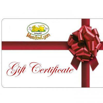 gift-certif-small
